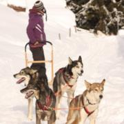 Escursione con cani da slitta e soggiorno - Trentino
