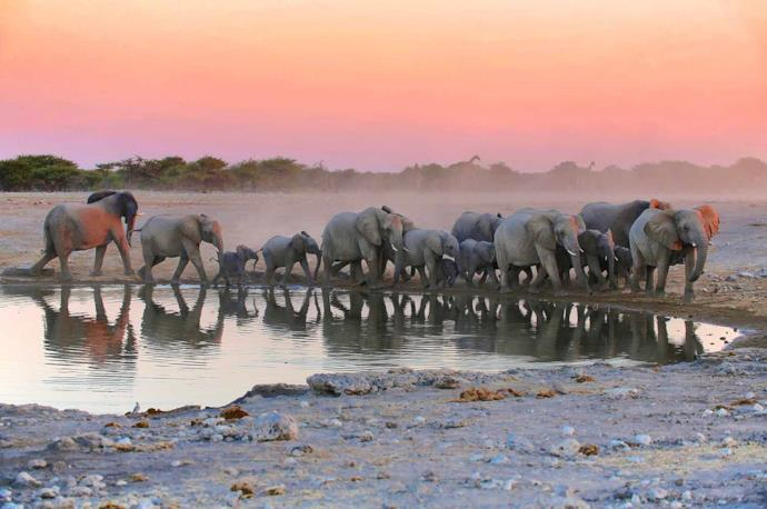 Herd of elephants in Etosha National Park, Namibia