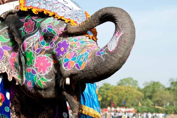 Indian elephant painted during Holi Festival