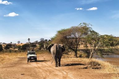 Tailormade safari in Tanzania: the great parks