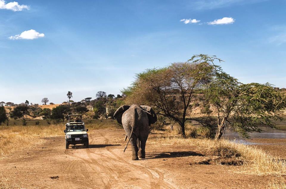 A safari in Serengeti park, Tanzania
