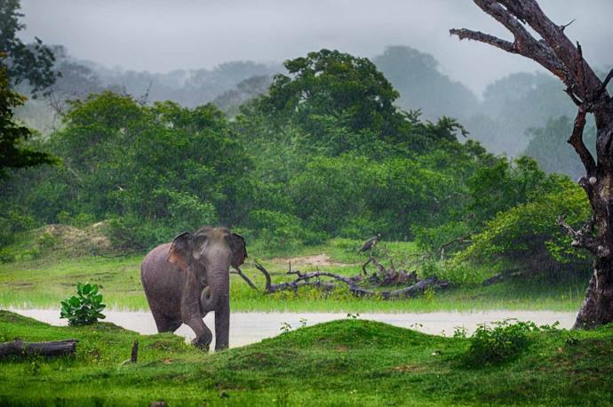 Elephant in a national park in Sri Lanka