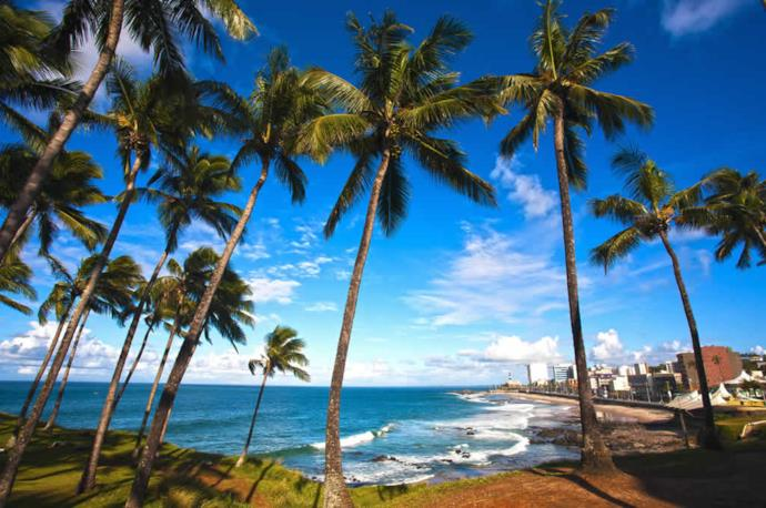 Palms in Salvador de Bahia beach in Brazil