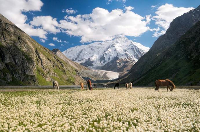 Field in Kyrgyzstan and horses