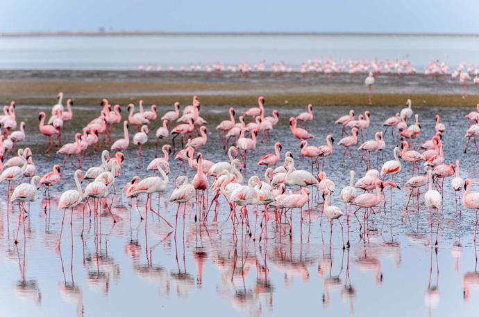 Flamingoes at Walvis Bay in Namibia