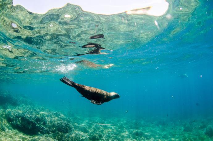 Sea lion in Baja California Sur