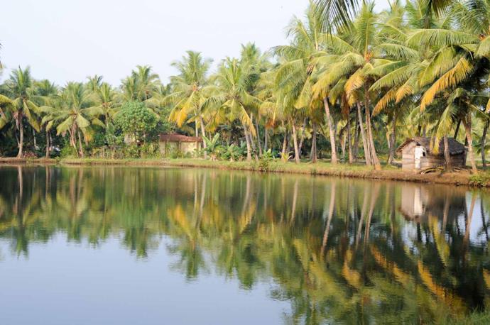 Backwaters of Kollam
