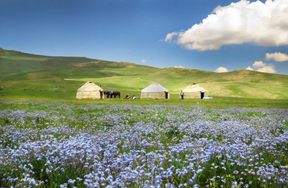 Field of flowers and yurtas in the background, Kyrgyzstan