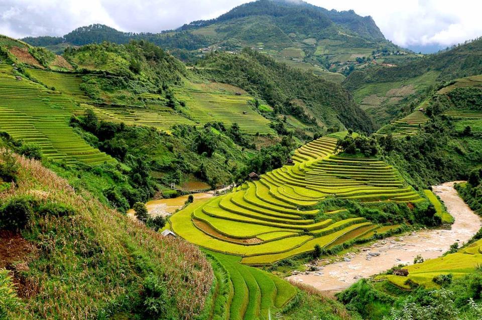 Tipiche risaie in Vietnam