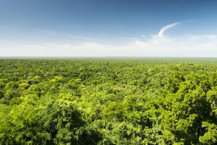 Riserva della biosfera di Calakmul, Messico