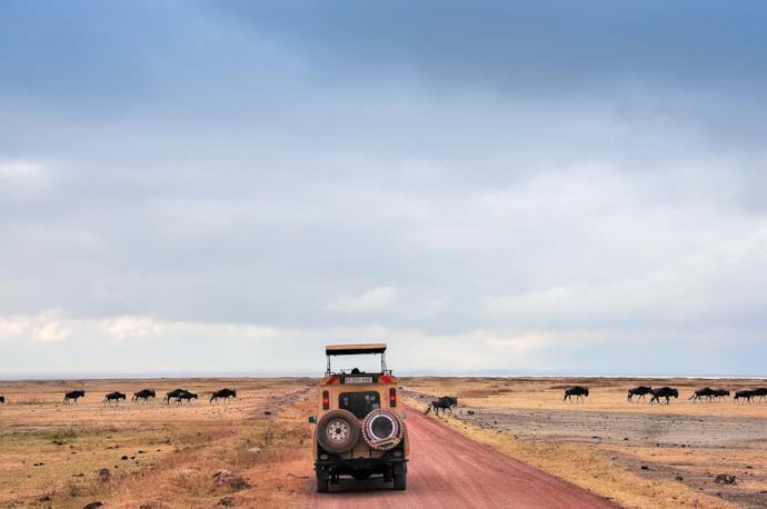Safari tra gli gnu nel cratere Ngorongoro in Tanzania