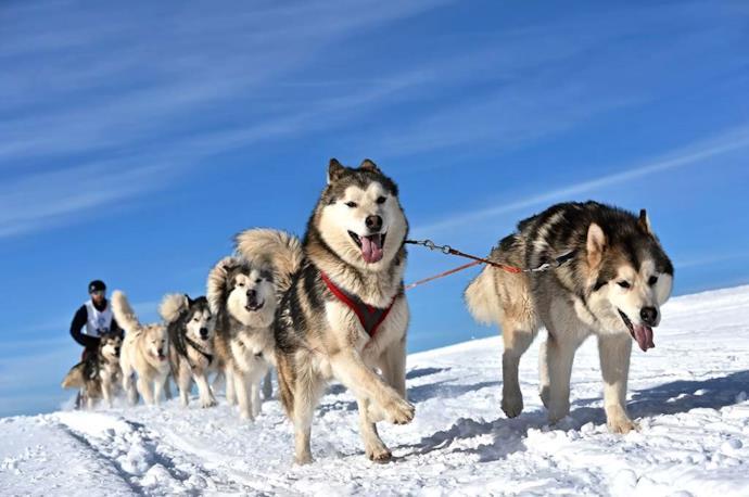 Tour in slitta con husky in Carelia, Russia