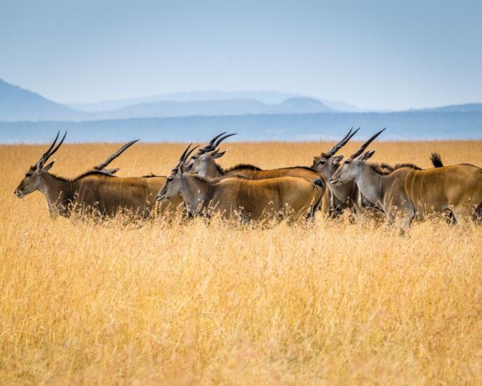Safari in Africa: quando andare