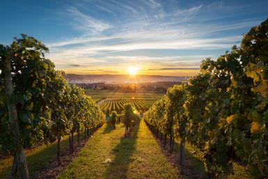 5 strade del vino in Italia tra sapori e colori