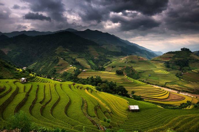 Terrazzamento, Vietnam