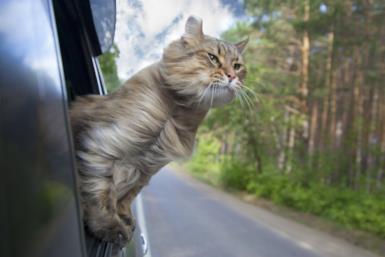 Gatti e viaggi: le mete imperdibili per gli amanti dei gatti
