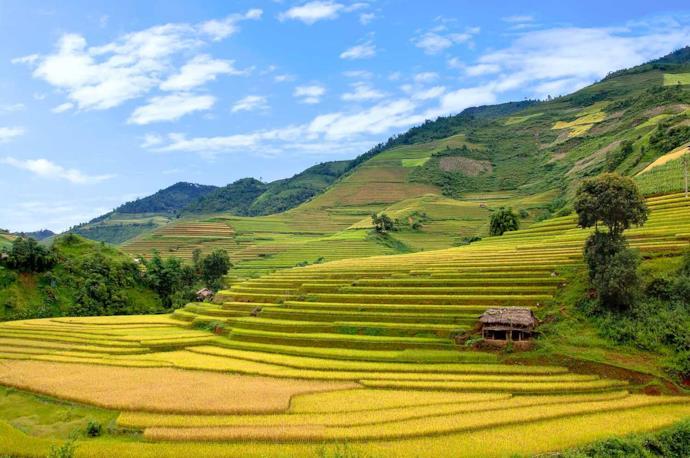 Terrazzamento con coltivazione di riso, Vietnam