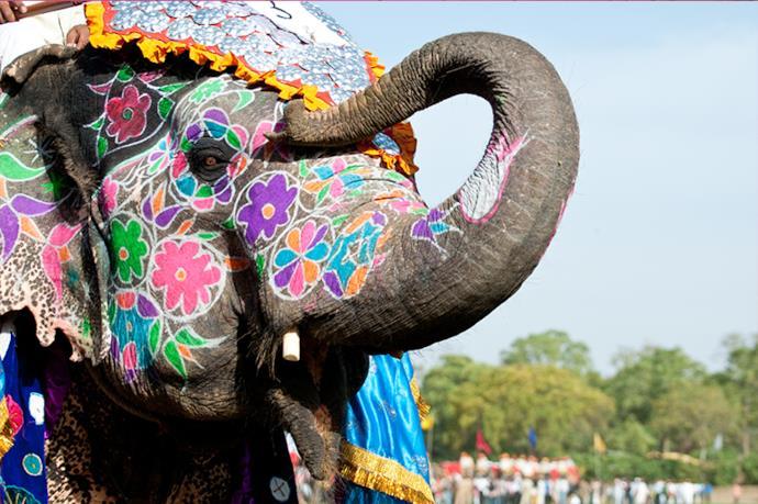elefante indiano festival di holi