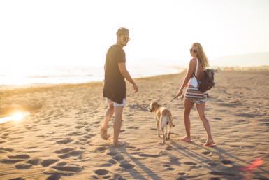 In viaggio con Fido: dove andare in vacanza con il cane