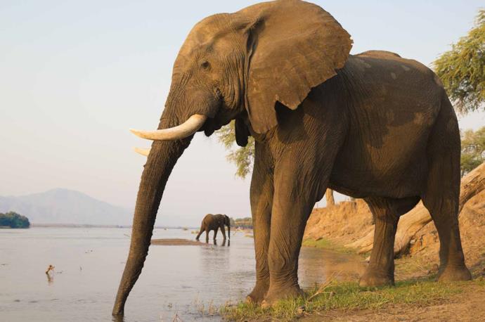 Safari in Zambia al Parco Luangwa