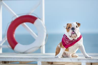 Le 5 migliori spiagge accessibili ai cani in Italia