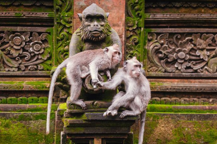 Scimmia a Ubud, Bali