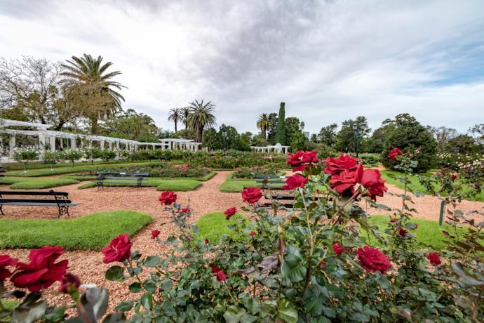 Rose al Parque Tres de Febrero a Buenos Aires in Argentina