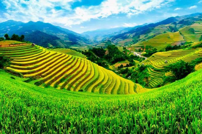 Terrazza di risaia in Vietnam