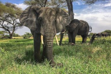Safari in Africa: offerte di viaggio e consigli utili