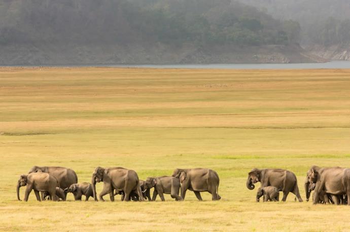 Gruppo di elefanti in un parco naturale in India