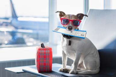 Come portare in aereo il cane: la guida per andare in vacanza con Fido