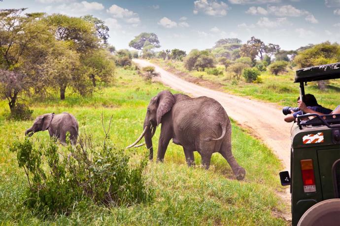 Tanzania, safari tra gli elefanti