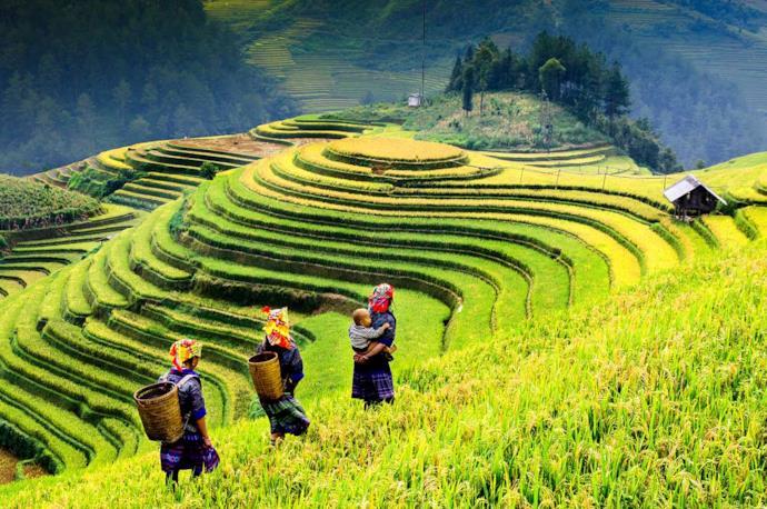 Risaia con contadini, Vietnam