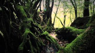 Sigur Rós - Dauðalogn (Video ufficiale)