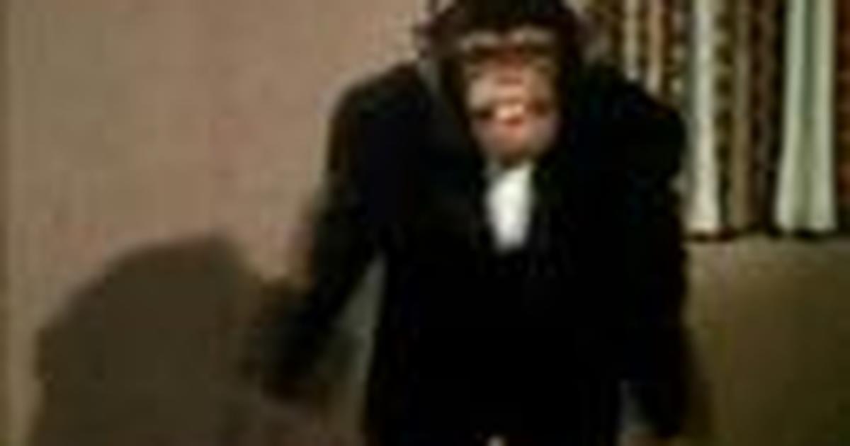 Bonobo orgia canzonatura sesso video